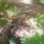Homem esquarteja jumenta e joga restos mortais em rio