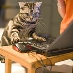 Animais - Pets vão ao trabalho junto com seus donos