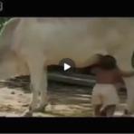 Utilidade Pública - mamar na vaca!!!!!!!!!!!!!!!!!!!!!