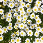 Poesias - Quando vier a primavera… (Fernando Pessoa)