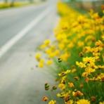 Livros - flores na estrada