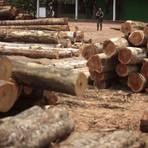 Desmate da Amazônia Legal aumenta 195% em março, aponta Imazon