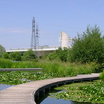 Meio ambiente - Jardins filtrantes: tratam rios, esgotos e resíduos industriais sem produtos químicos