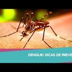 Saúde - Dengue: sintomas e prevenção