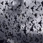 Especial Halloween - Conheçam os Morcegos-Vampiros