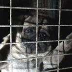 Vendas de animais online cruel realidade
