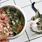 Comida caseira para seu cão e gato
