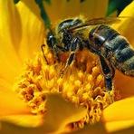 Por que o mel é o único alimento que não estraga?