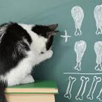 É possível treinar um gato ?