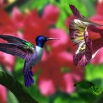 Beija Flor - A luta constante para encontrar o verdadeiro amor