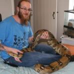 Curiosidades - Homem leva enorme susto ao acordar e encontrar 36 cobras ao lado de sua cama após seu réptil de estimação dar à luz