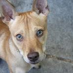 Você sabe como pode ajudar animais traumatizados pelo abandono ?
