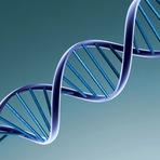 Microorganismos Desafiam a Lei do DNA