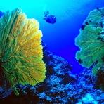 Oceanos: um ''mundo'' em nosso mundo?