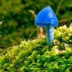 Os 10 cogumelos mais estranhos do mundo
