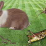A Formiga, o Coelho, o Gafanhoto e a Aranha