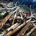 Cresce área de desmatamento na Amazônia em setembro, segundo Imazon