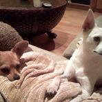 Fotos -  Alanis Morissette mostra seus cachorros