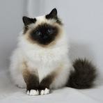 Os gatos tem seu próprio jeito de demostrar carinho