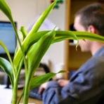 Pesquisa australiana relaciona plantas ao aumento da produtividade no trabalho