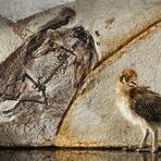 Fósseis de dinossauros com penas podem reformular história evolutiva