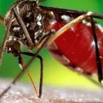 Saúde - MS registra 1,5 milhão de casos de dengue no país em 2015