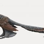 Curiosidades - Vocês conhecem o Changyuraptor?