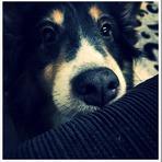 """3 Medicamentos que  você """"não"""" deve dar ao seu cachorro"""