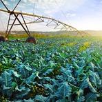 Diferenças entre a agricultura moderna e a tradicional