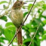 Dez espécies de aves são vistas pela primeira vez no oeste do Paraná