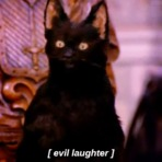 Seu gato planeja te matar e isso não é piada