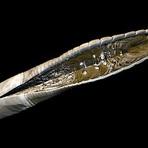 Método de dissecação poderia revigorar a zoologia