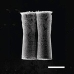 Tecnologia & Ciência - Micromotores autônomos transportam substâncias pelo corpo
