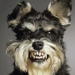 Como contornar o problema de cachorra bravo