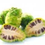 Saúde - .Contraindicações da Fruta Noni
