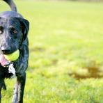 6 Dicas para desfrutar de parques na companhia do cachorro