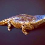 Fósseis de Salamandra Gigante são Encontrado em Portugal