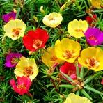 Pigmentos de flores fluorescentes podem ajudar no tratamento de malária e câncer
