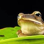 Uma em cada seis espécies pode ser extinta por causa das mudanças climáticas
