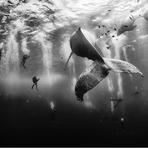 Hobbies - Conheça as fotos Vencedoras do Concurso National Geographic em 2015!