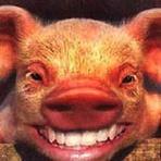Humor - Trote do Alcemar - Porquinhos