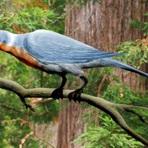 Animais - Aves que voavam sobre Dinossauros