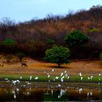 Curiosidades - Profetas da chuva usam sinais da natureza para fazer previsões no Ceará