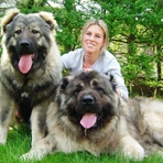 Quais são as 25 maiores raças de cães do mundo