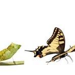 Afinal, quem deu asas à lagarta?