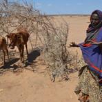 Meio ambiente - El Niño ameaça 60 milhões de pessoas em países em desenvolvimento