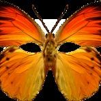Softwares - 7 Máscaras de Carnaval de borboleta png