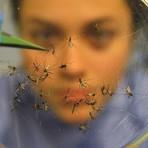 Utilidade Pública - Zika: emergência de saúde pública de alcance global