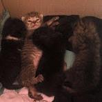 Animais - Urgente adoção de gatinhos em Ituiutaba Minas Gerais