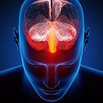 Saúde -  Os Dois Tipos de Empatia Localizados no Cérebro